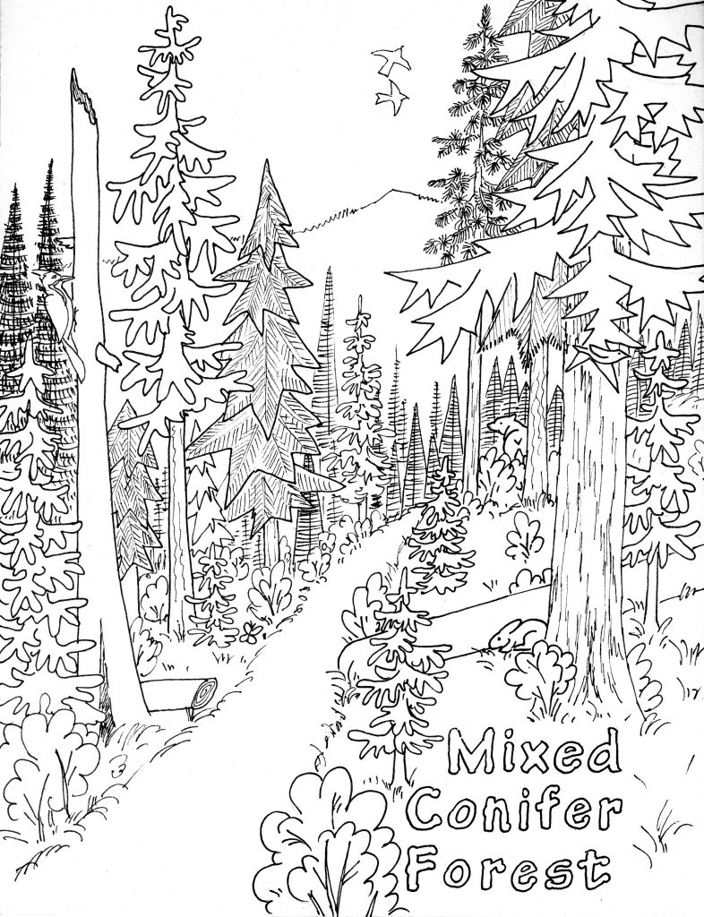 Nature Coloring Pages to Print