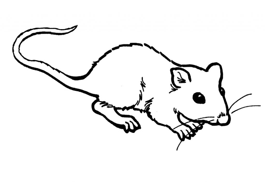 Baby Rat Coloring Pages