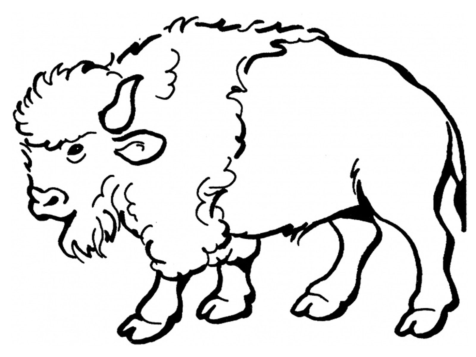 free animal coloring pages kids - free printable bison coloring pages for kids