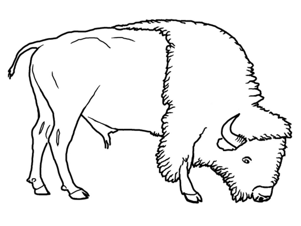 Bison Coloring Pages for Kids