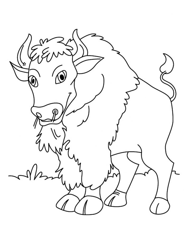 free printable kid coloring pages | Free Printable Bison Coloring Pages For Kids