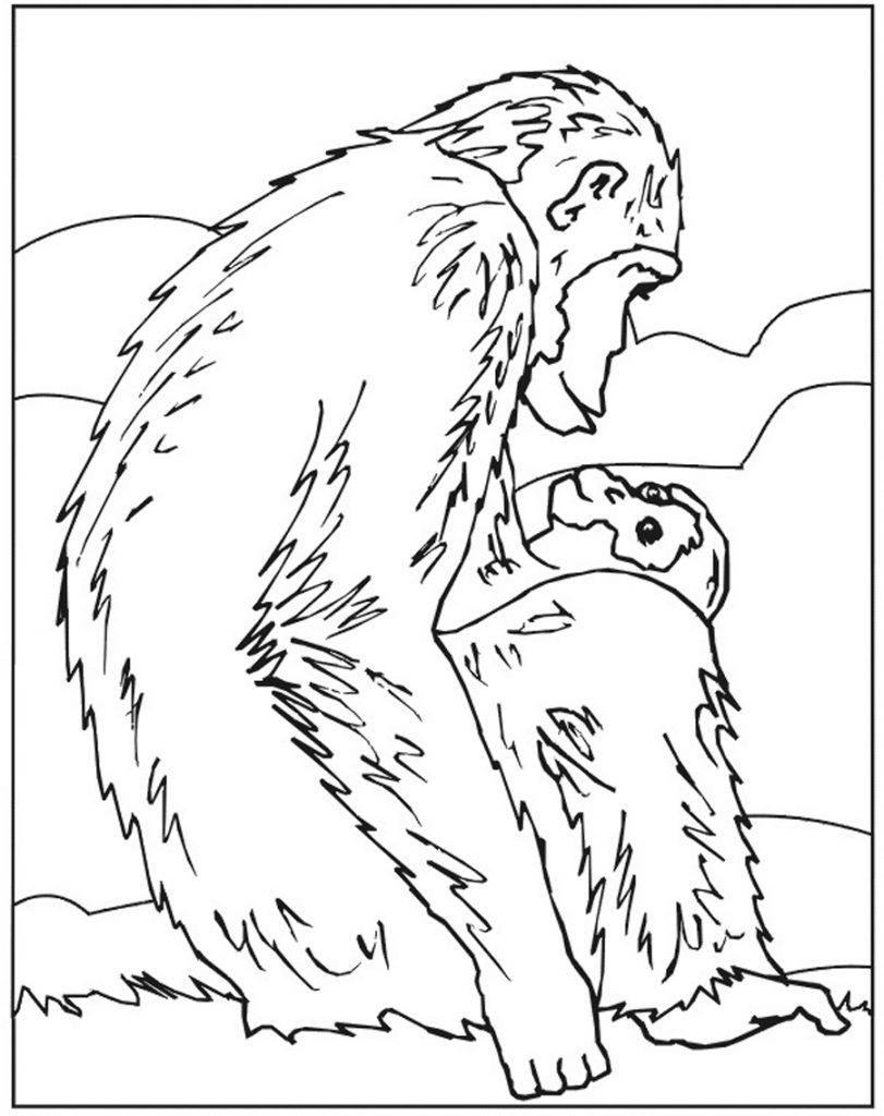 Free Printable Chimpanzee Coloring