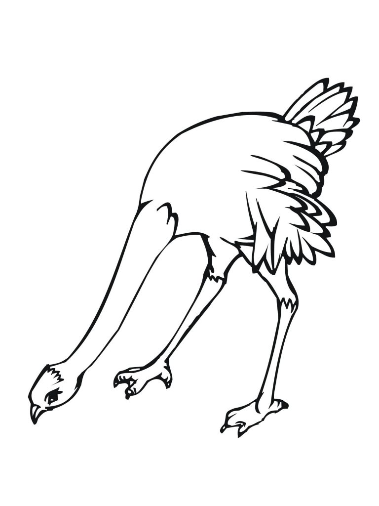 Coloring Pages of Ostrich