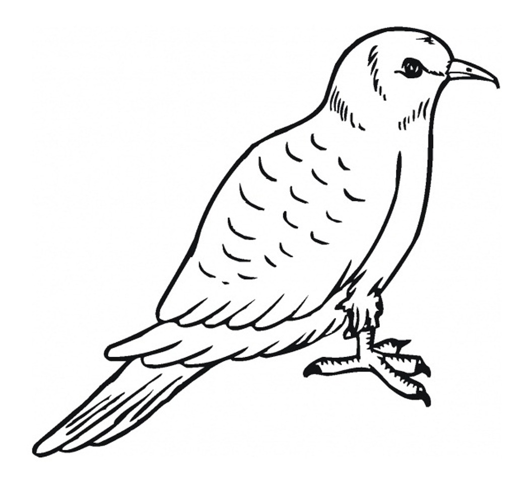 Coloring Pages Of Pigeon
