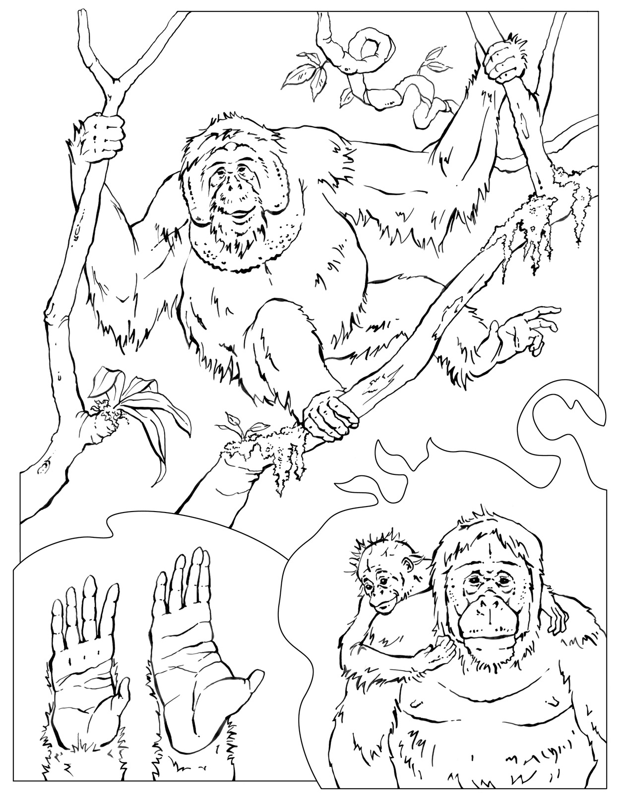 chimpanzee coloring pages - photo#27