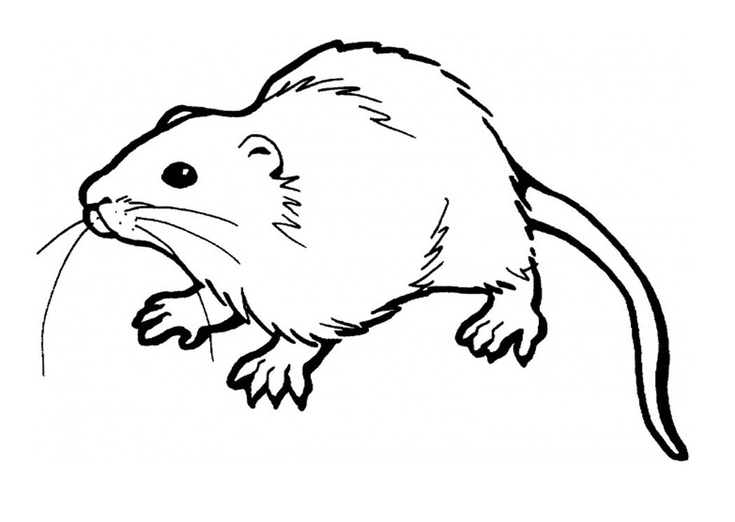 Rat Coloring Pages Printable
