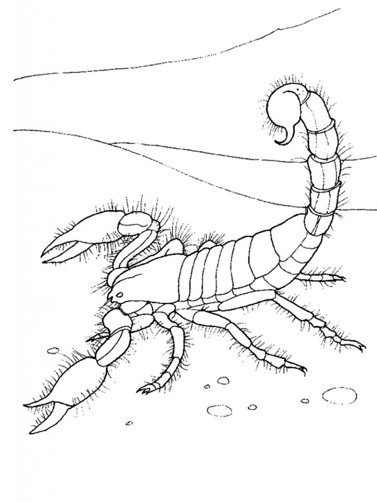 Free Scorpion Coloring Pages