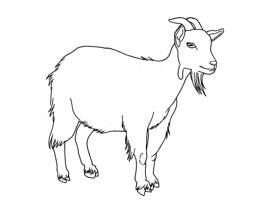 sheep and goats coloring pages - photo#31