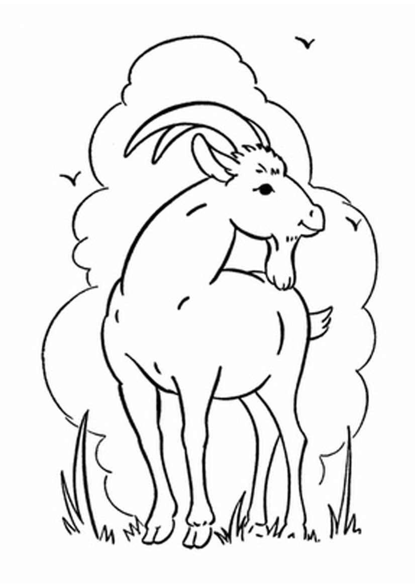 free printable kid coloring pages | Free Printable Goat Coloring Pages For Kids