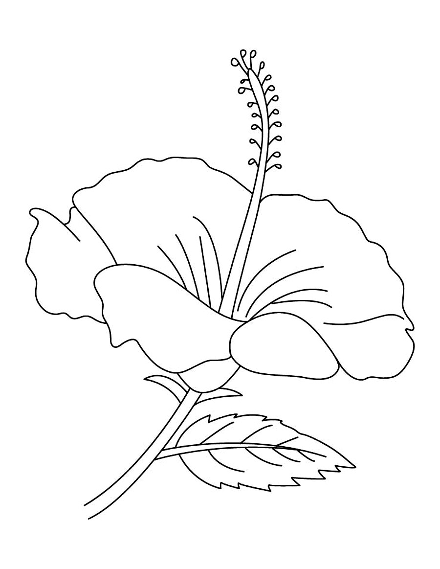 outline pictures flowers coloring pages for kids | Free Printable Hibiscus Coloring Pages For Kids