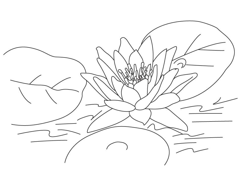Lotus flower coloring pages pictures