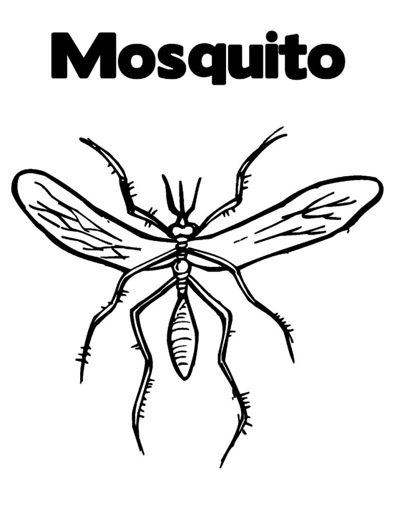 Free Printable Mosquito Coloring