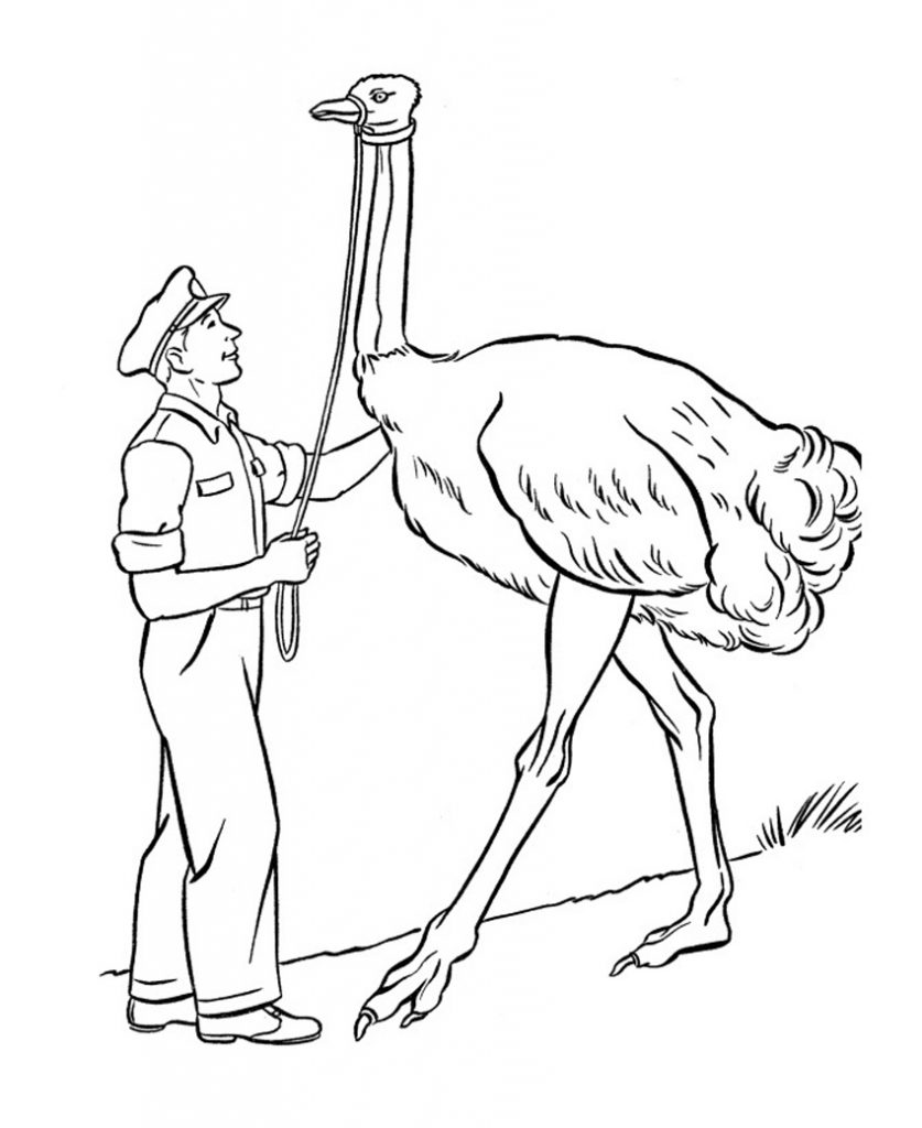 Free Printable Ostrich Coloring