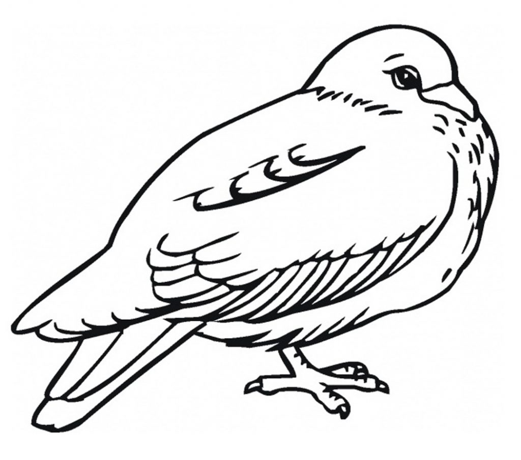 Effortless image within free printable bird coloring pages
