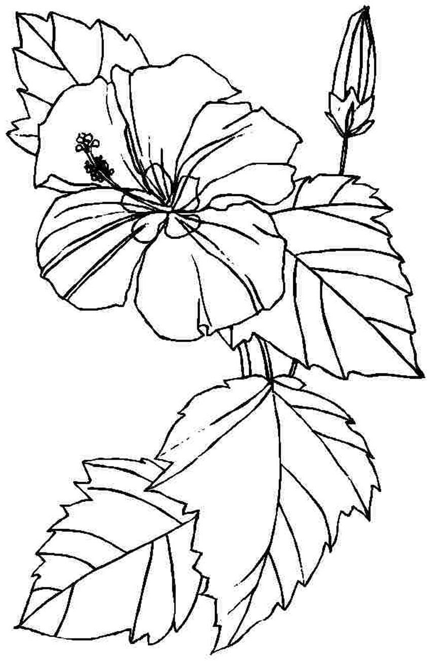 Free Printable Hibiscus Coloring