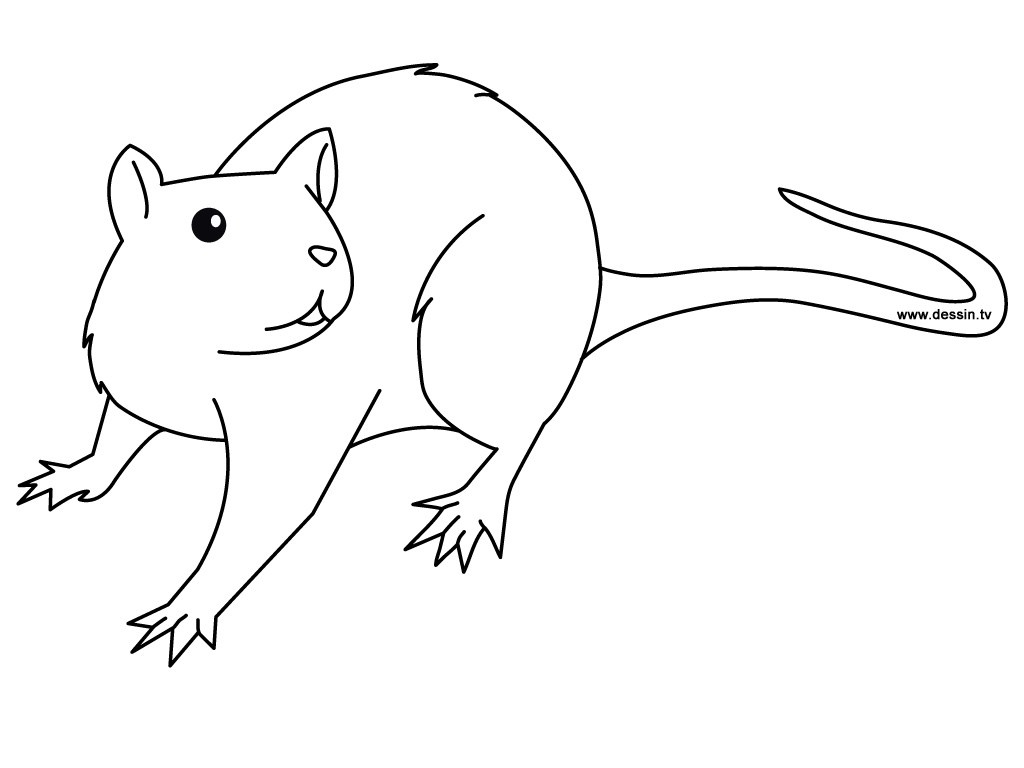 Printable Rat Coloring Pages