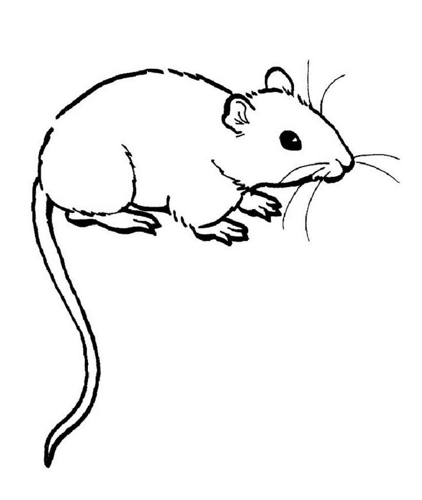 Rat Coloring Pages
