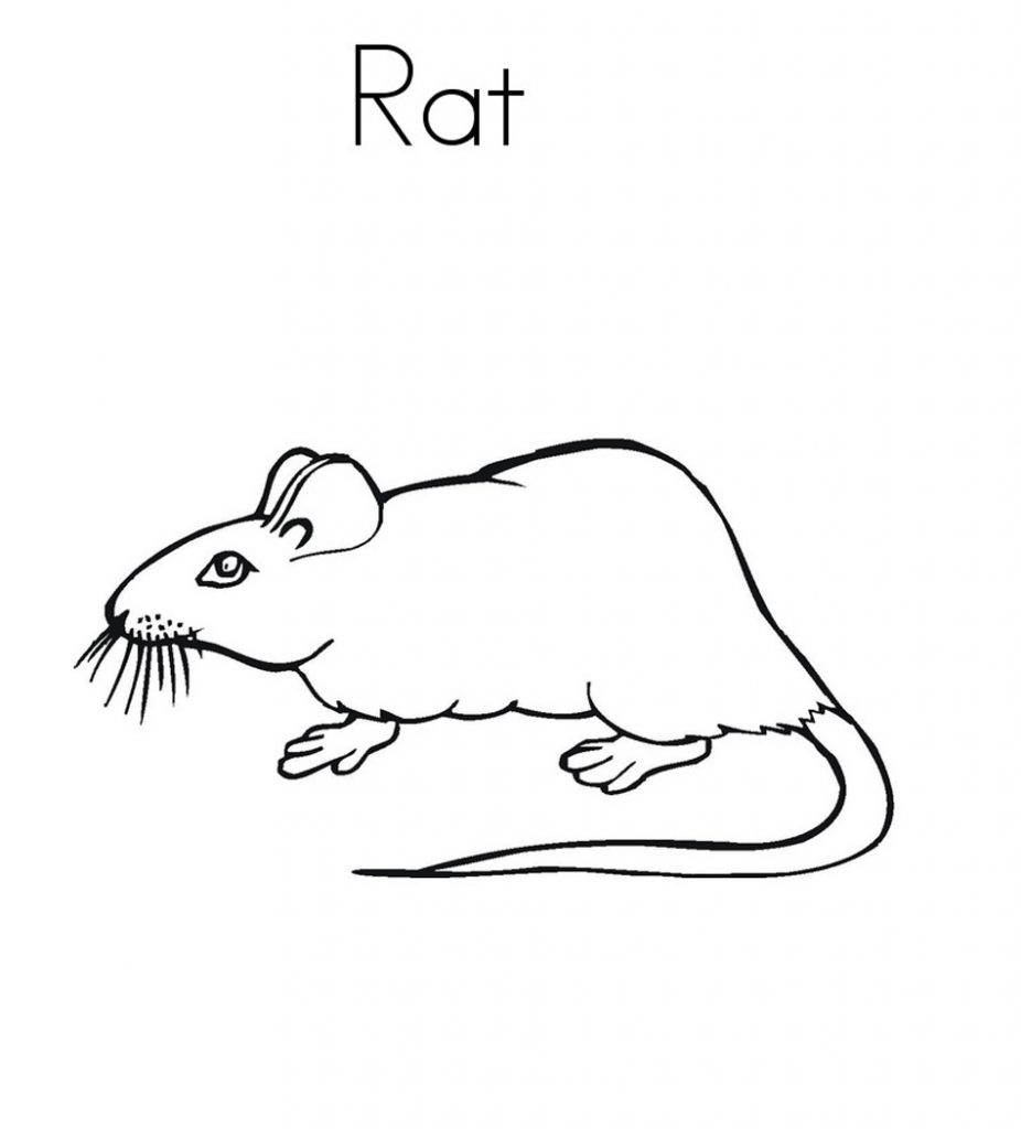 printable rat coloring pages full - photo#2