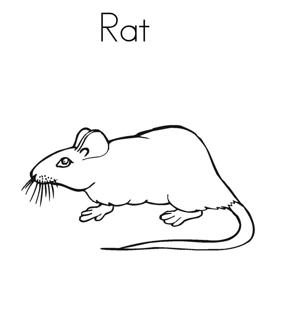 Free Printable Rat Coloring Pages