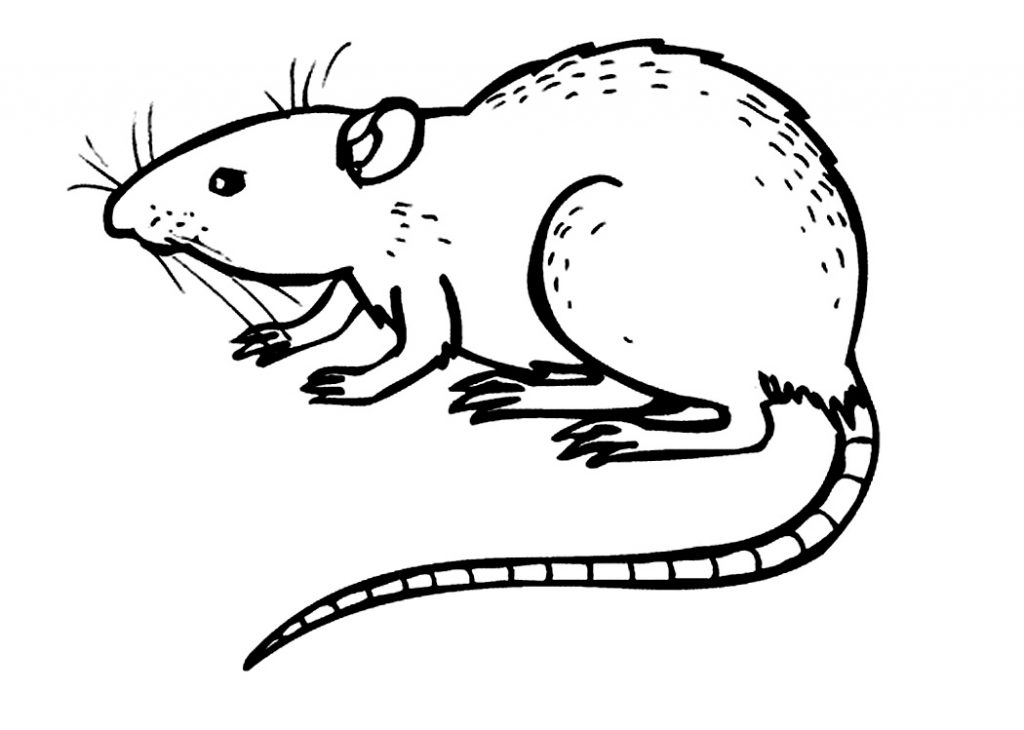 Rat Coloring Pages to Print