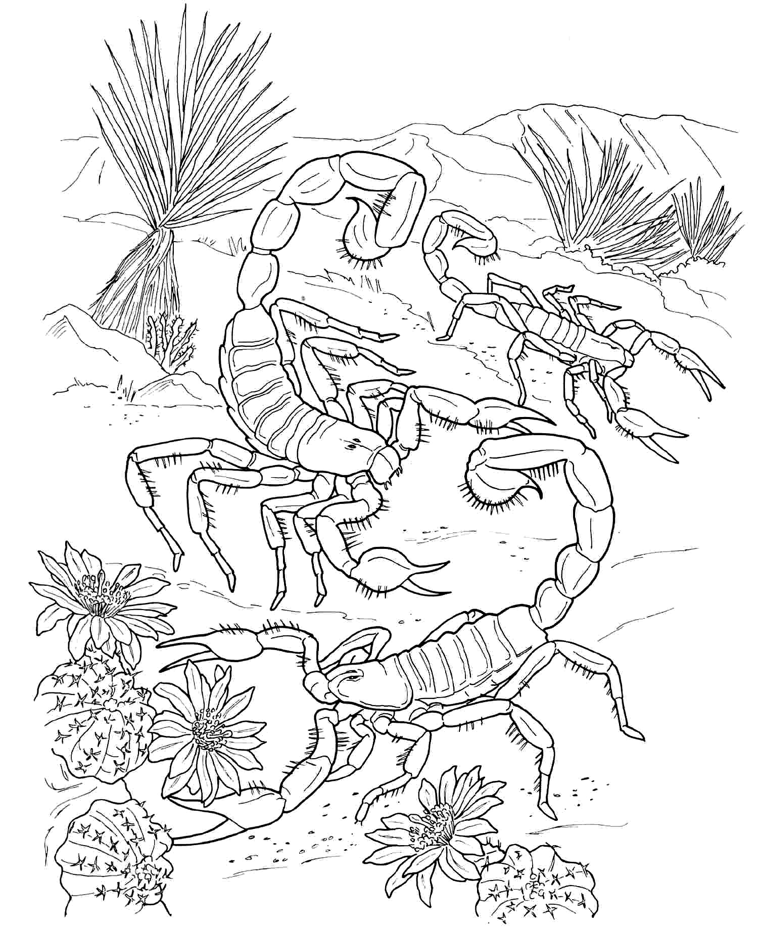 coloring pages y - free printable scorpion coloring pages for kids