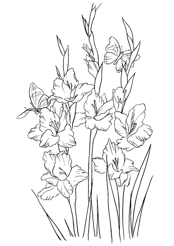 free gladiolus flowers to color