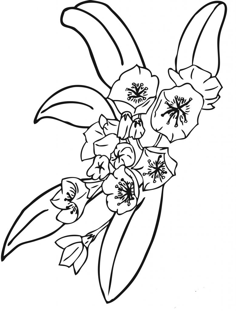 printable pictures of flowers to color
