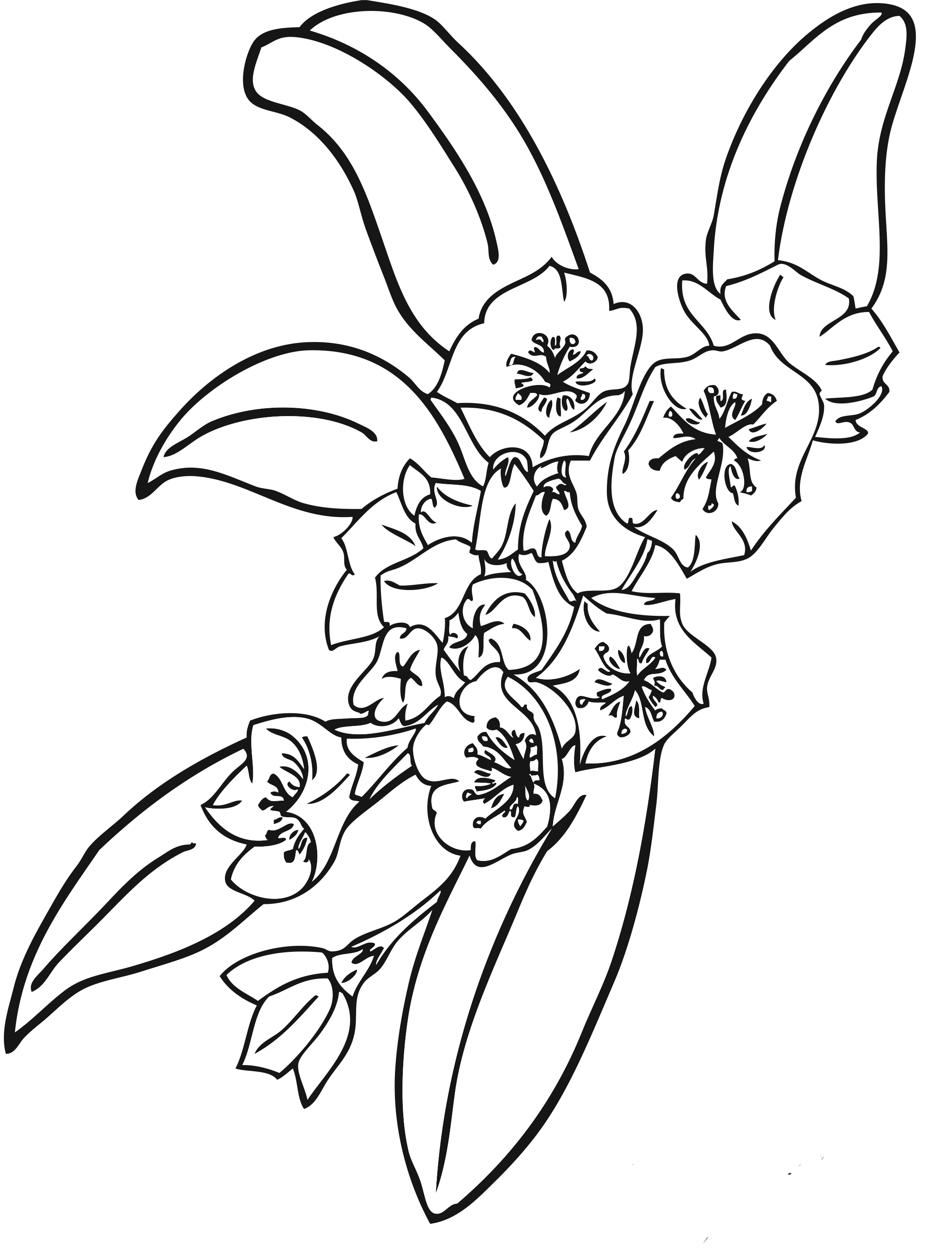 Wonderful Printable Pictures Of Flowers To Color