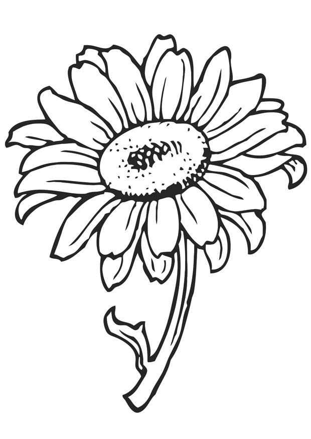 pics of coloring pages flowers - photo#46