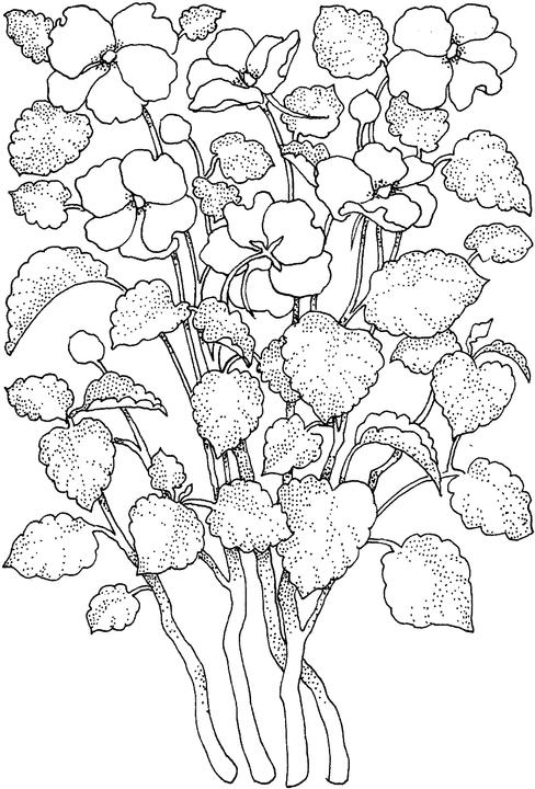 Flower Coloring Pages for Adults Free Printables