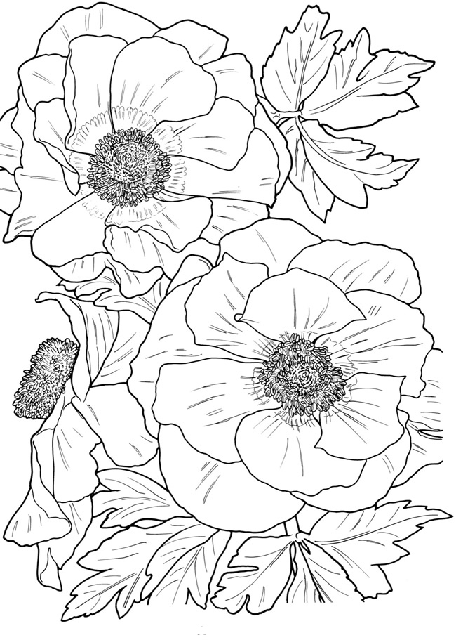 image relating to Flower Coloring Pages for Adults Printable named Flower Coloring Internet pages for Grown ups - Easiest Coloring Internet pages For Youngsters
