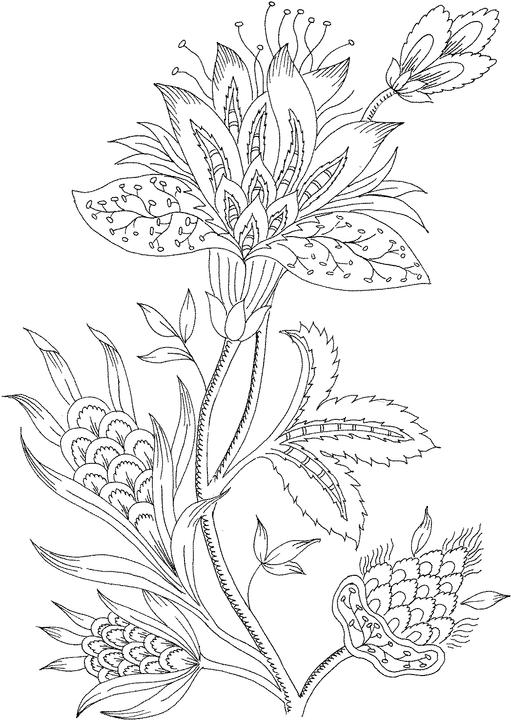 photograph regarding Flower Coloring Pages for Adults Printable called Flower Coloring Web pages for Grown ups - Perfect Coloring Webpages For Little ones