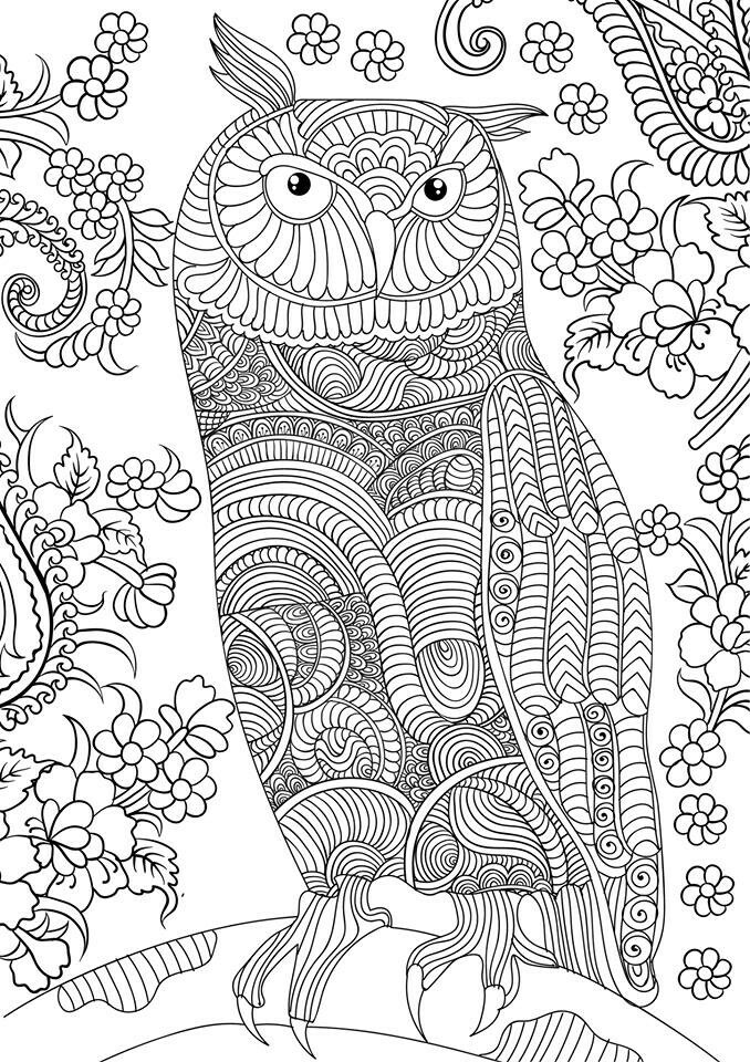 Owl coloring pages for adults free detailed owl coloring Coloring books for young adults