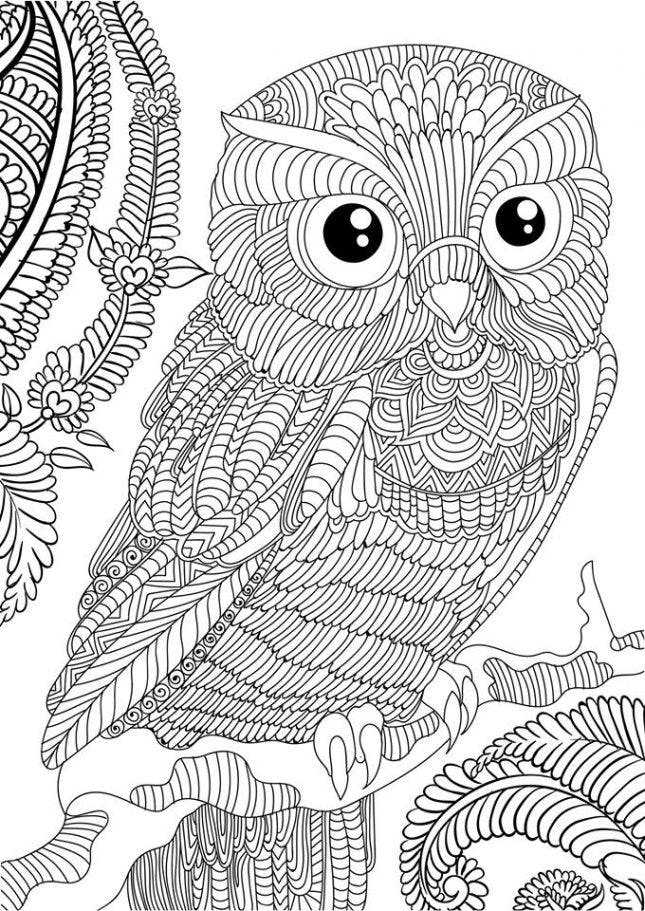 Free Printable Adult Coloring Owl