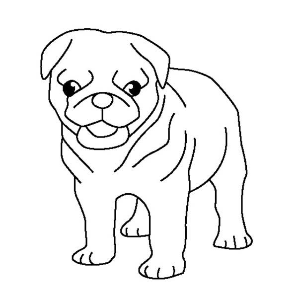 Cute Pug Dog coloring page | Free Printable Coloring Pages | 600x600