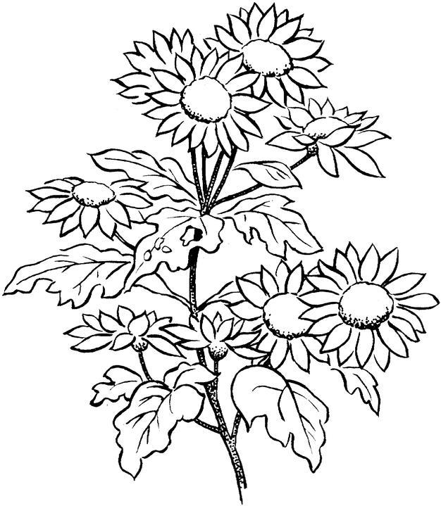 Coloring Pages Flower Flowers Printable Coloring Pages Flower ... | 719x626