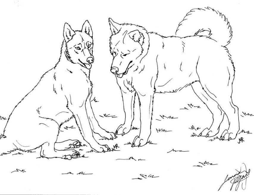 Cute Baby Huskies Coloring Pages