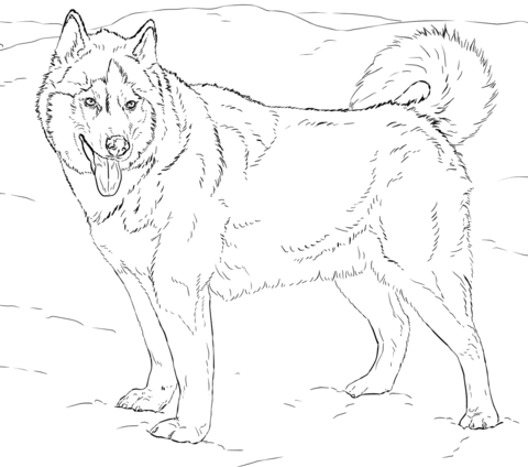 husky coloring pages best coloring pages for kids