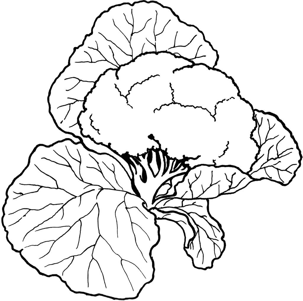 Cauliflower Vegetable Coloring Pages