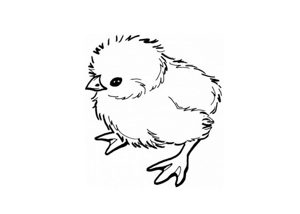 Baby Chicken Coloring Page