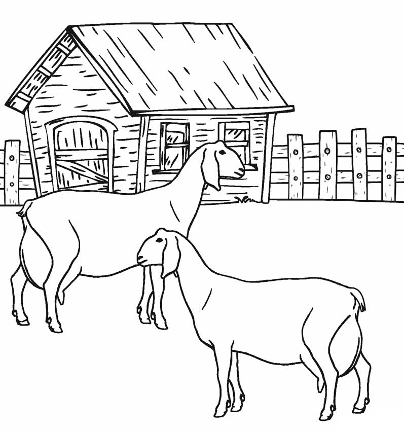 Goats Animal coloring pages