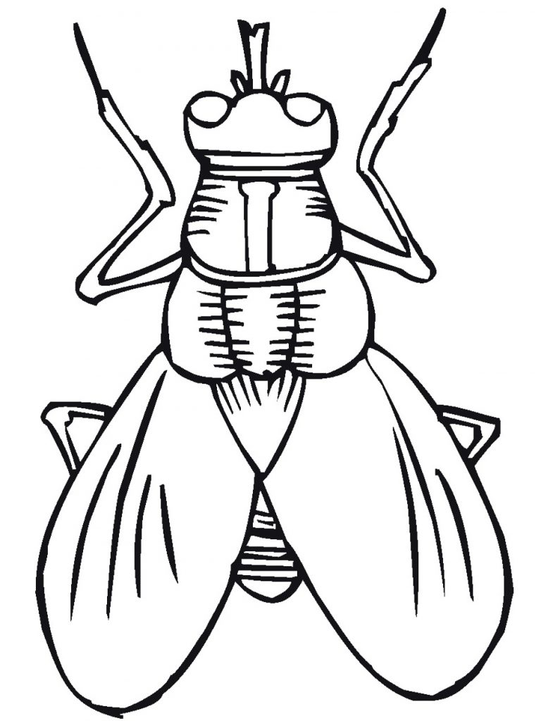 Fly Insect Coloring Pages