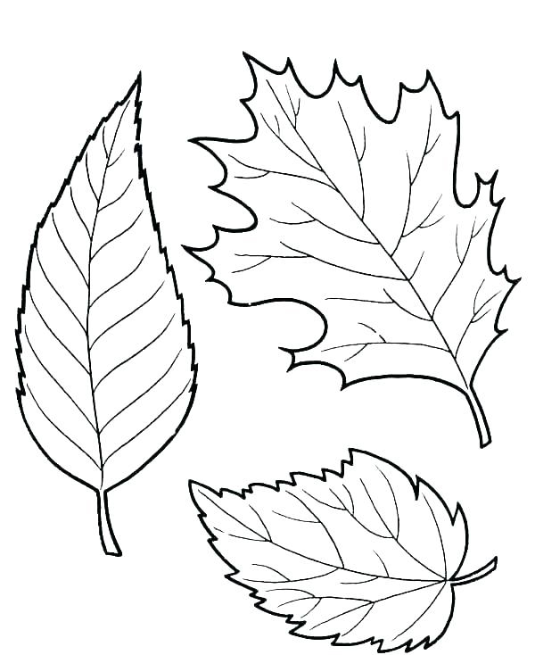Free Printable Fall Leaves Coloring Pages