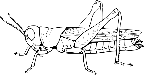insect coloring pages please - photo#49
