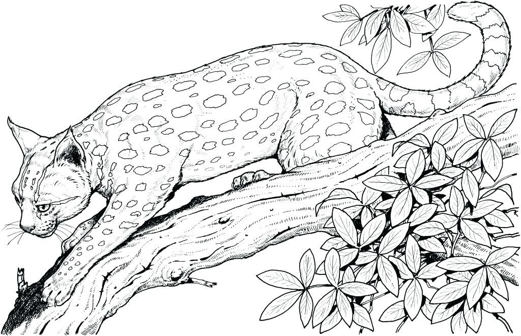 Jungle Cat Coloring Pages