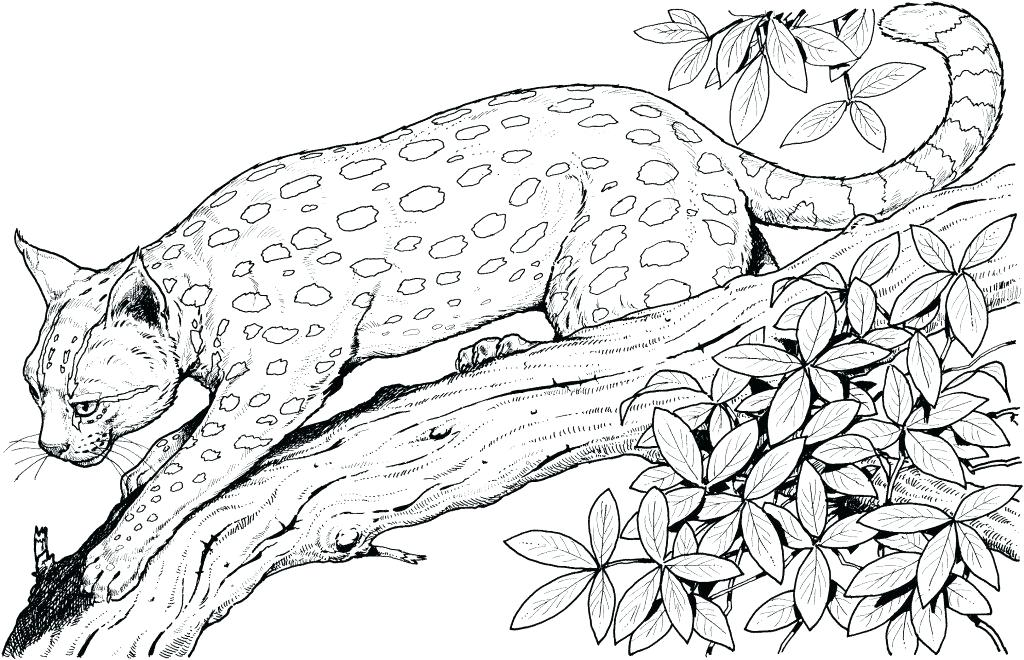 Jungle Coloring Pages Best Coloring Pages For Kids