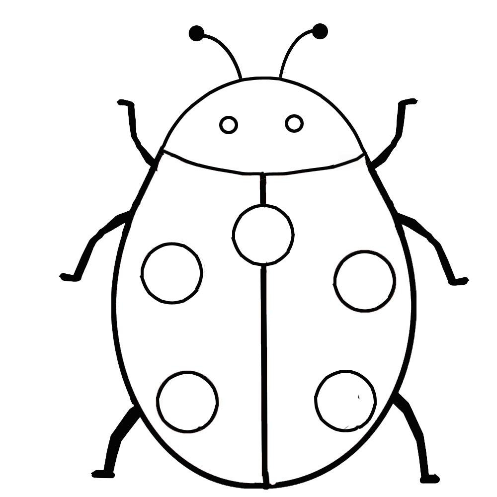 Ladybug Insect Coloring Page