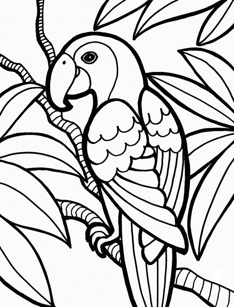 Parrot Jungle Coloring Pages