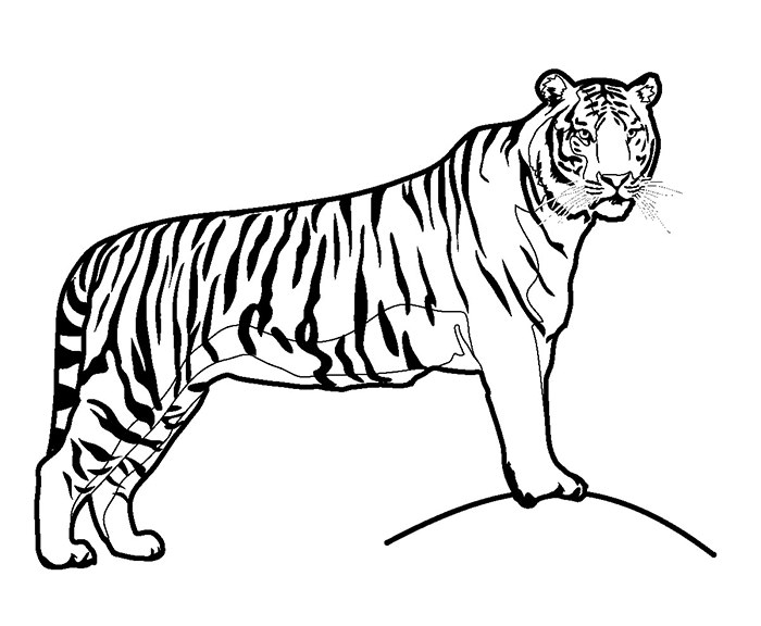 Tiger - Animal Coloring Pages