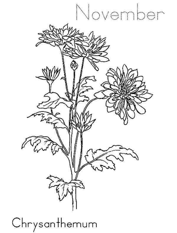 Fall Flowers - November Coloring Pages